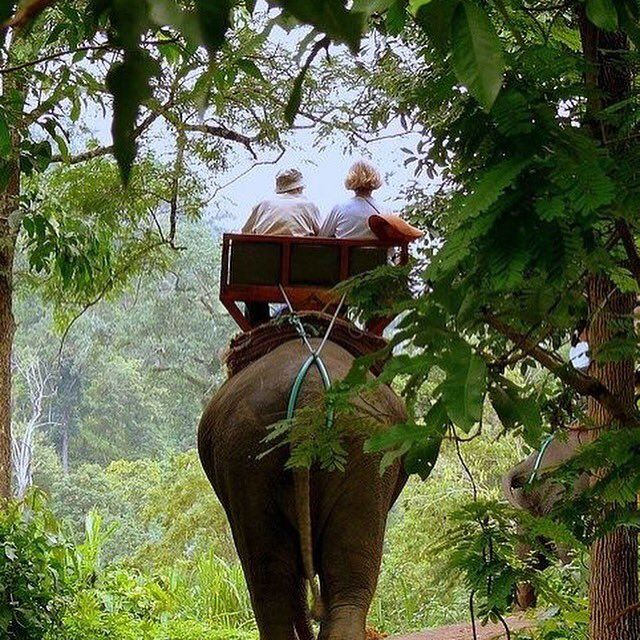 "A-Money on Twitter: ""Help rehabilitate elephants in Thailand https://t.co/h3Jw8Kbs0r https://t.co/lApJCM9nym"""