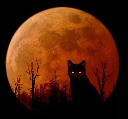 Halloween Kitty Desktop Nexus Wallpapers Halloween Cat Halloween Art Black Cat
