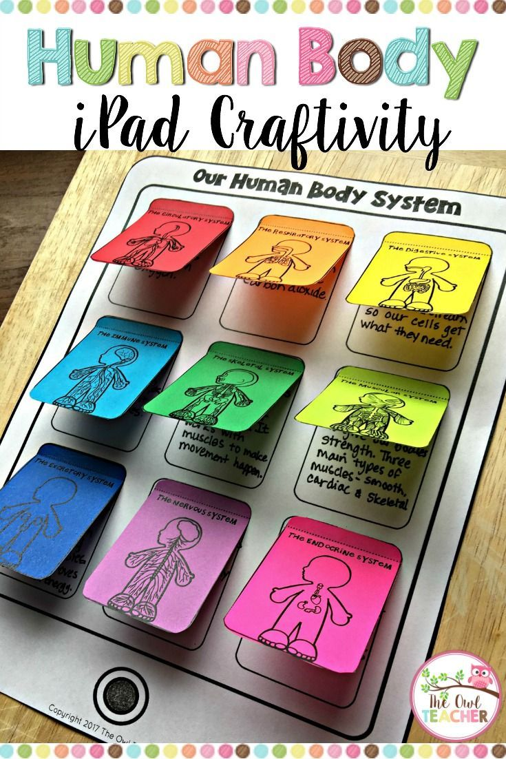Help your students explore the nine different human body systems with this engaging iPad Crafitivity in your science classroom and differentiate it! digestive system | circulatory system | respiratory system | muscular system | nervous system | immune system | endocrine system