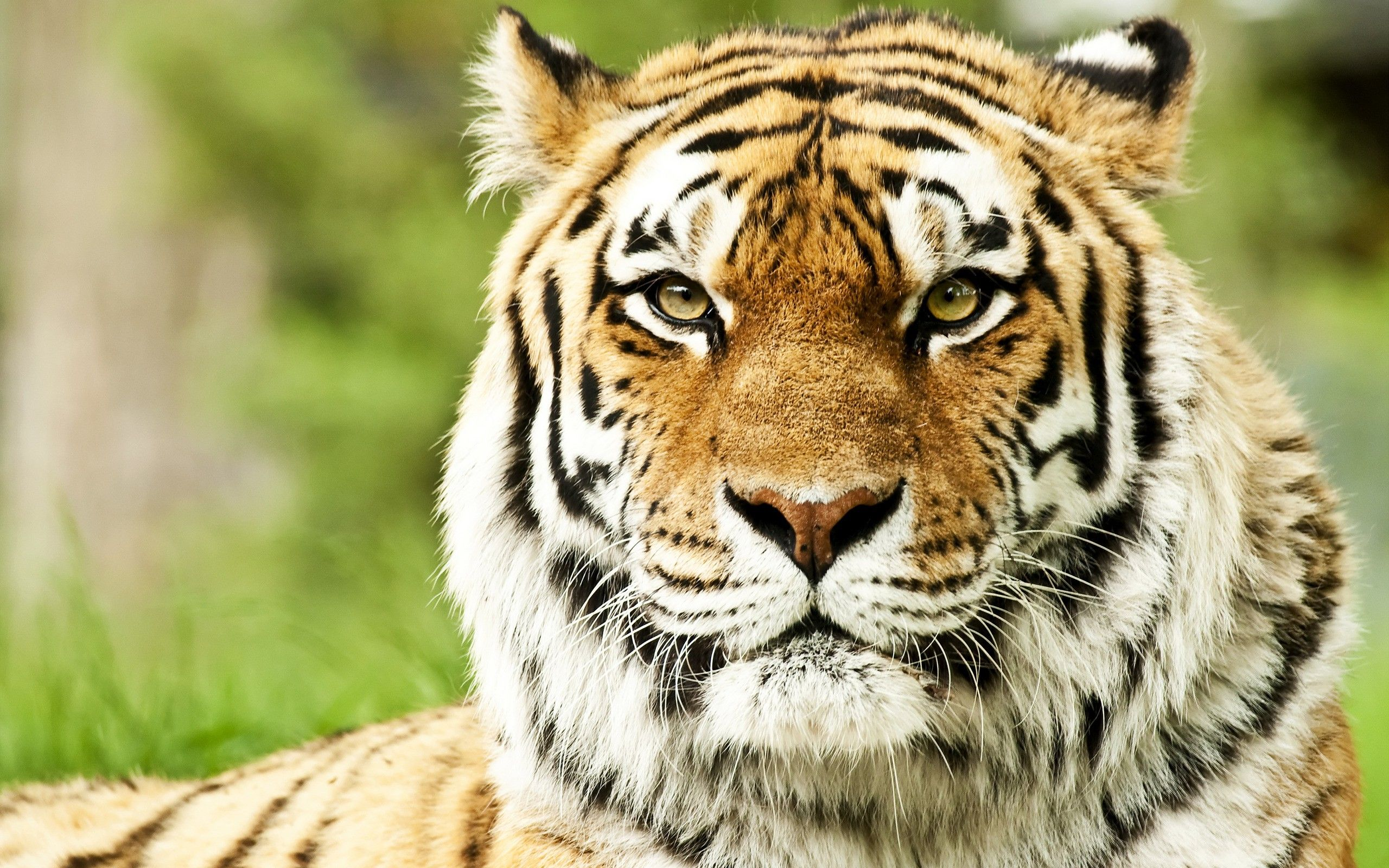 Nature Animals Hd Cool 7 HD Wallpapers