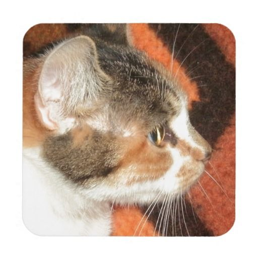 Cat Profile Beverage Coaster!  #kitten #cat #zazzle #store #adorable #meow #fuzzy #gift #present #customize http://www.zazzle.com/conquestkitty*
