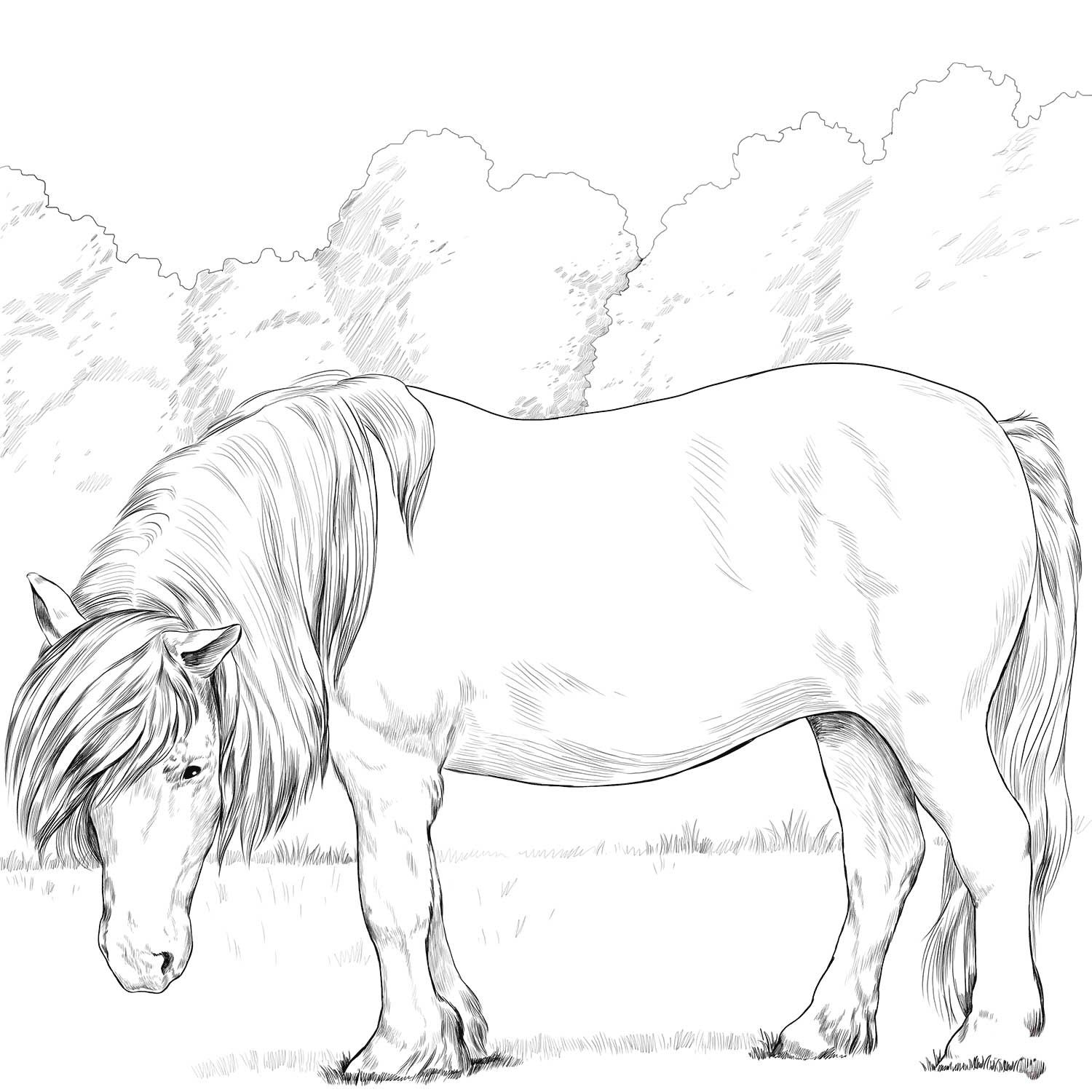 Shetland Pony Coloring Page Horse Coloring Pages Coloring Pages Horses Horse Coloring Books