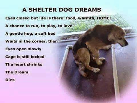 A Shelter Dog Dreams | Eyes closed but life is there: food, warmth, HOME! A chance to run, to play, to love a gentle hug, a soft bed waits in the corner; then eyes open slowly. Cage is still locked. The heart shrinks. The dream dies.