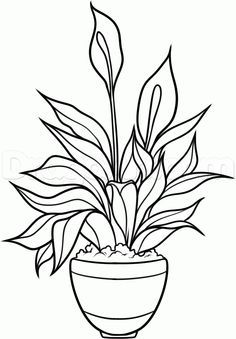 How To Draw A Peace Plant Peace Lily By Dawn Lilies Drawing