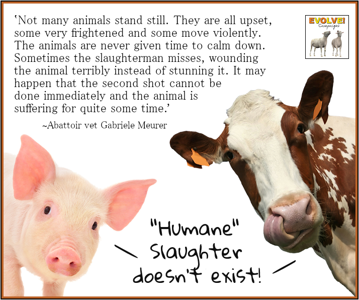 "Don't buy the lie! ""Humane"" slaughter doesn't exist.. Says"