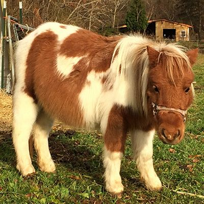 Adopt Me The Barnyard Sanctuary Nj Pet Farm Animal Rescue Adoption And Fostering New Jersey Brown And White Horse White Horses Horse Painting