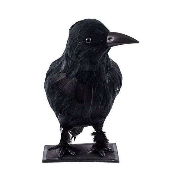 Halloween Props Featherd Raven 23cm ($10) ❤ liked on Polyvore - halloween props decor