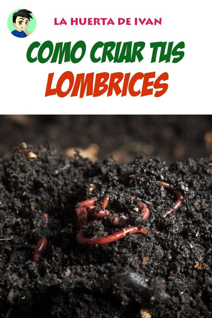 17 Ideas De Lombriculcura Lombricultura Lombricomposta Compostaje