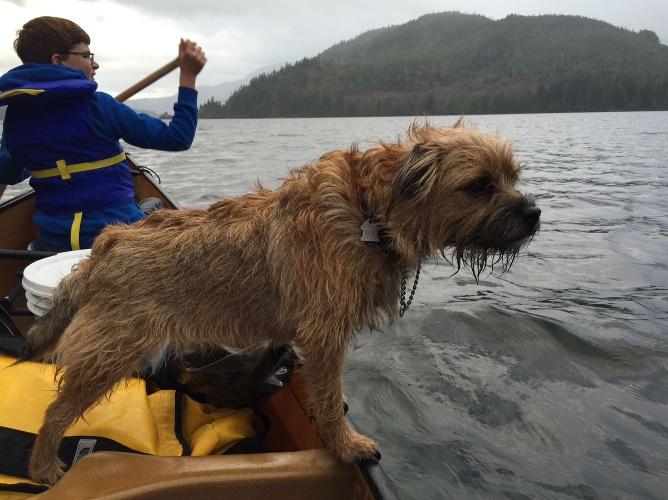 Canoeing With The Dog Canoe Dogs