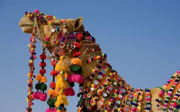 Decorated Camel in Jaisalmer