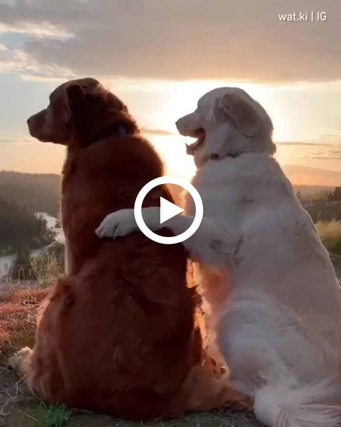 The best view is the ones shared with your best friend