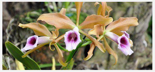 Orquideas Jardin Botanico Medellin Colombia