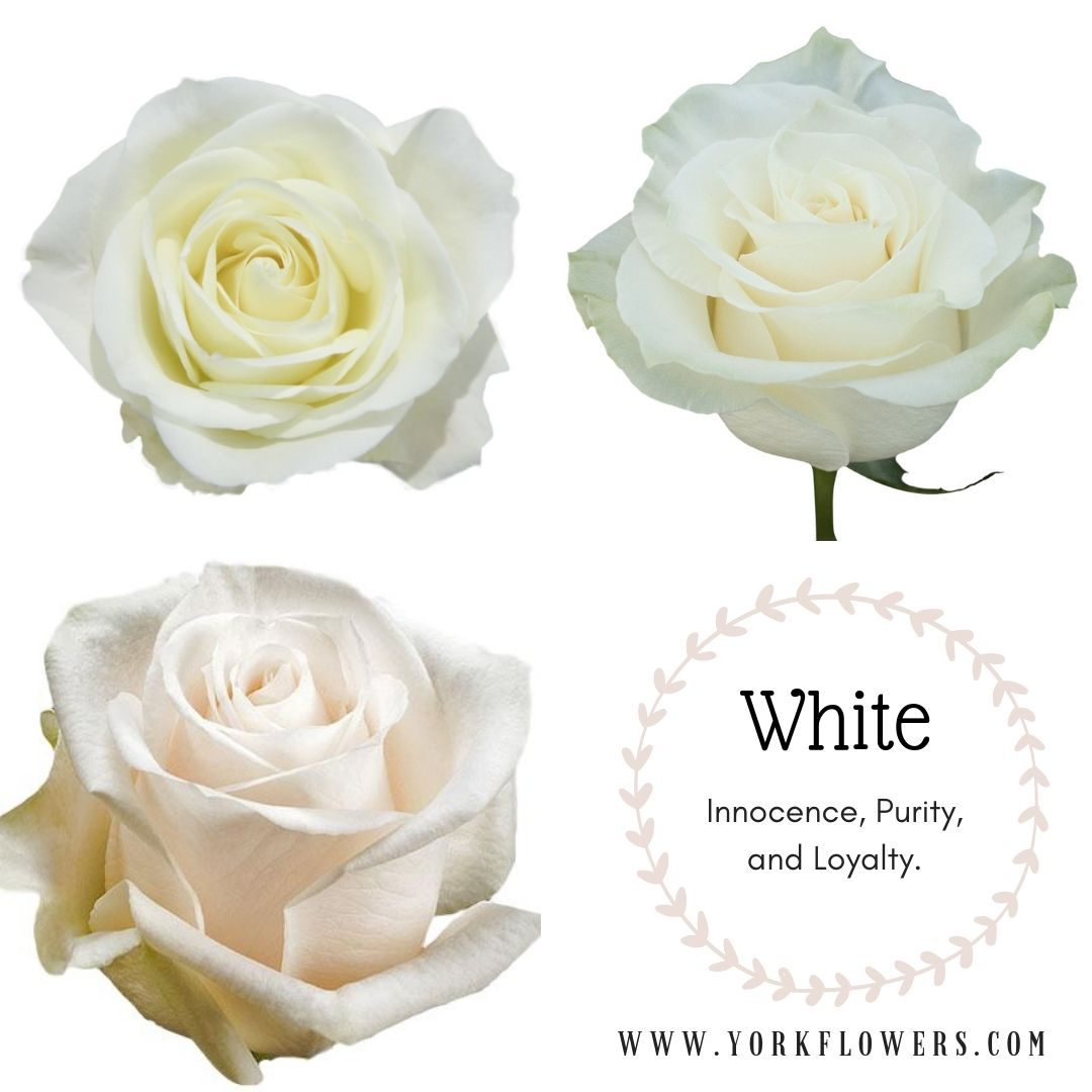 White Roses Meaning Rose Meanings Pinterest Rose Meaning Rose