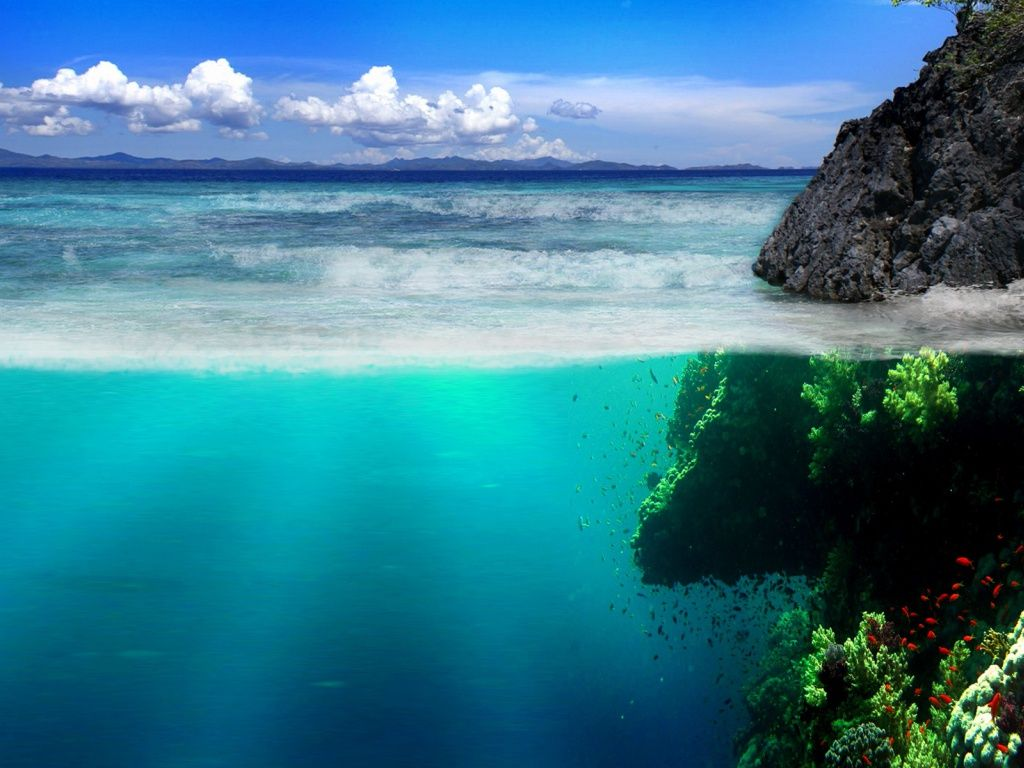 Under Water Rock Vegetation Hd Desktop Wallpaper Scenery Wallpaper