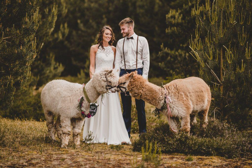Styled Shoot Hochzeit In Der Natur Mit Alpakas Alpakas Hochzeit Wald Hochzeitsfoto Idee