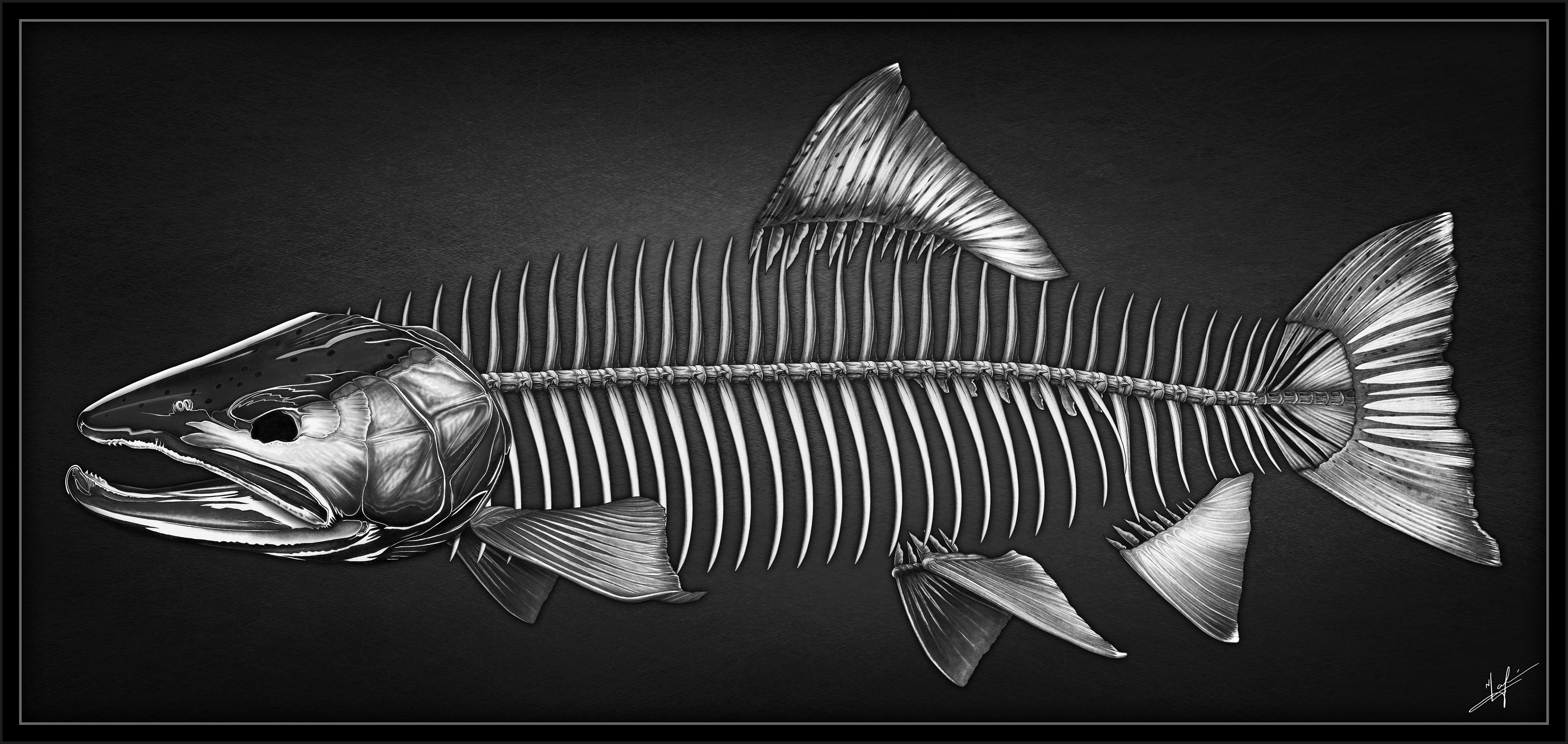 Рыбные кости картинки