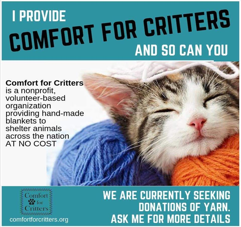 How To Volunteer Comfort For Critters Animal Welfare League Animal Shelter