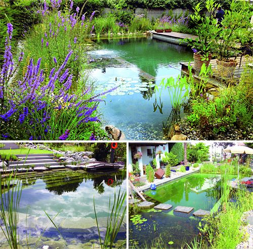 Biotop Natural Pools – Like A Billabong In Your Backyard | OhGizmo!