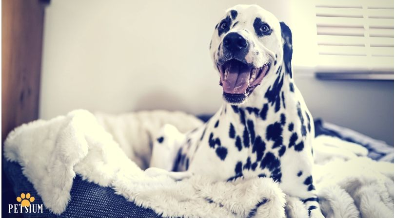 The Simple Things Your Dog Needs Dogs Your Dog Dog Owners