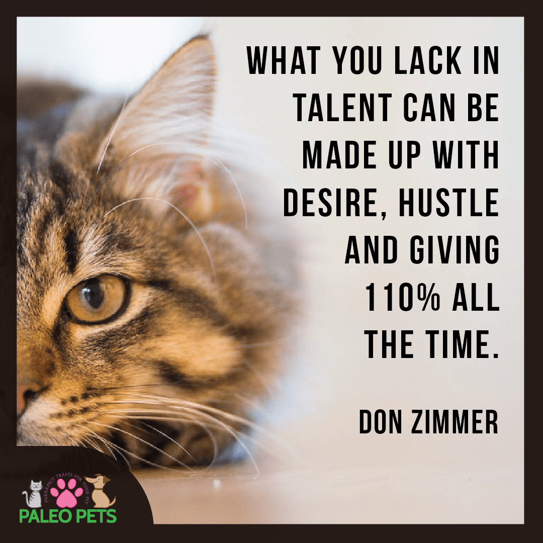 Desire and Hustle #Cats #Pets #Quotes #PaleoPets #Animals | Cute ...