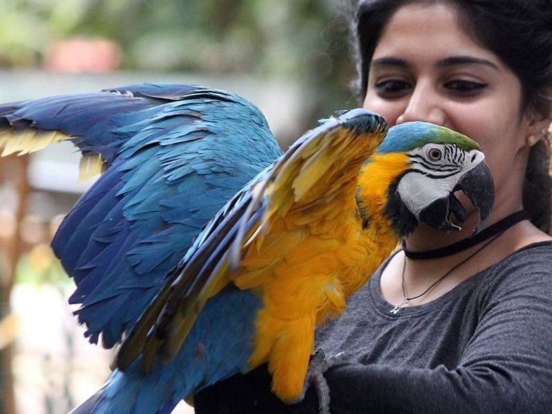 Tthe fourth edition of the Bangalore Pet Show on May 20 and 21. The annual event is usually organized in January, but due to the bird flu scare it was postponed to May. Apart from canines, the spotlight will also be on exotic birds this time.