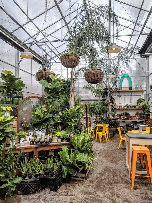 Maypop Coffee and Garden shop in St. Louis