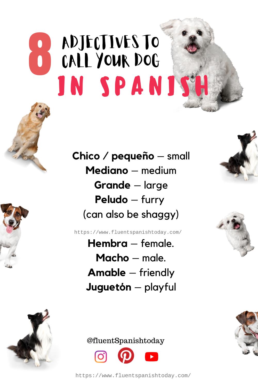 Spanish Ways To Call Your Dog Spanish Adjectives Spanish Adjectives Learning Spanish Spanish Vocabulary