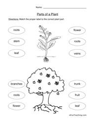 Plant Parts Worksheet With Images Plants Worksheets Science