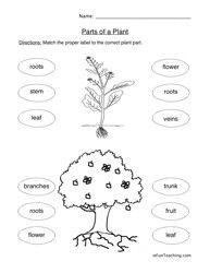 What Do Plants Make Worksheet | plants | Science worksheets, Parts ...