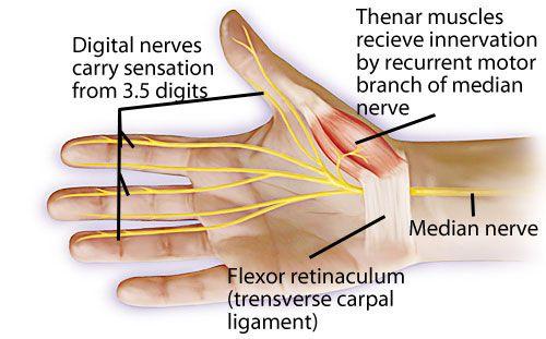 Median nerve thumb