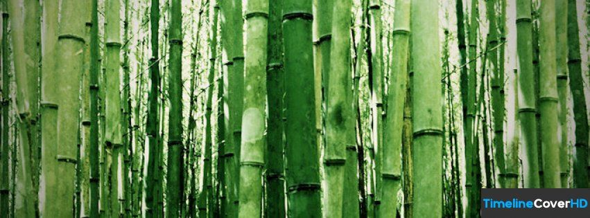 Green Bamboo Facebook Timeline Cover Hd Facebook Covers Timeline