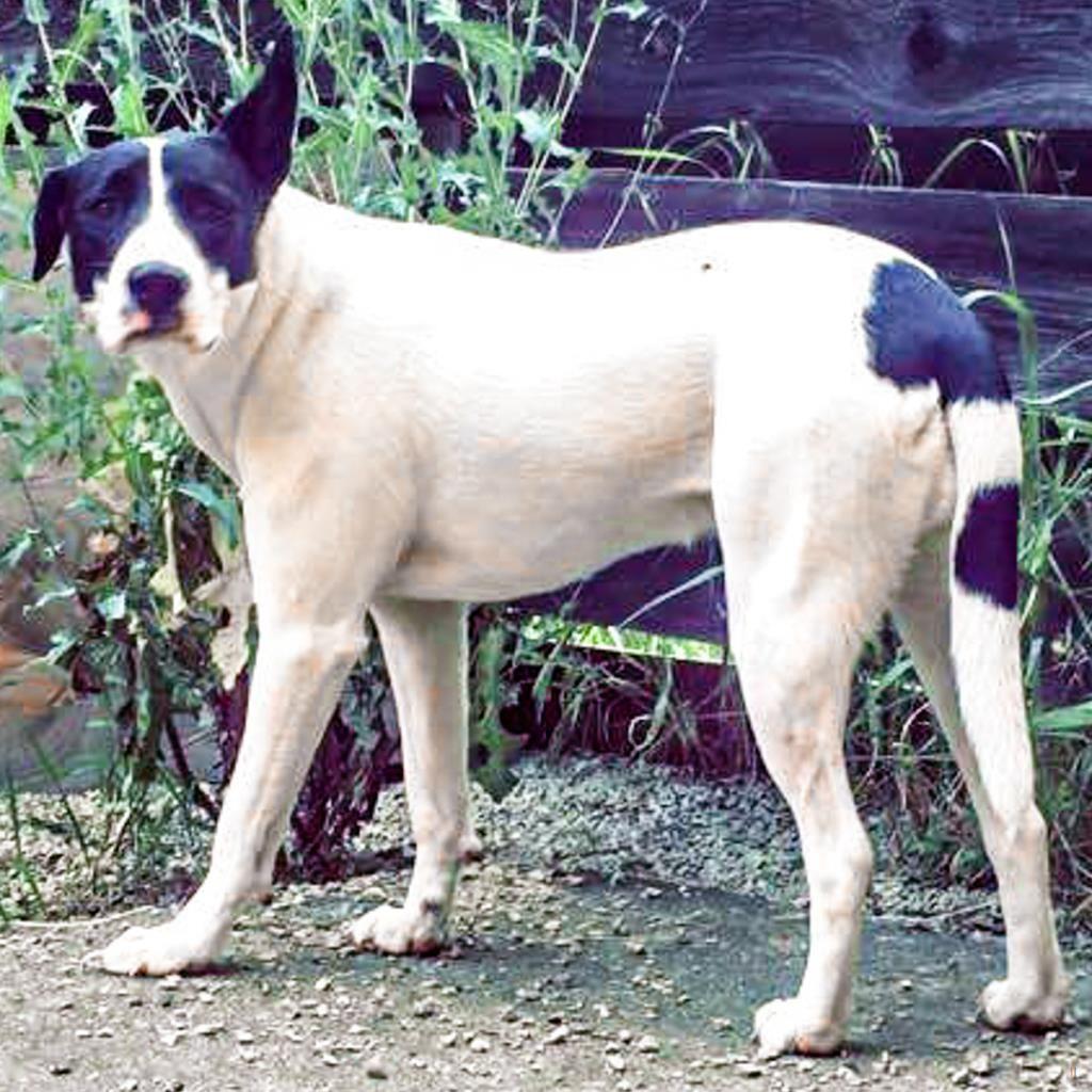 Back Home Dog Retriever Perry Twp Canton Oh Usa 44706