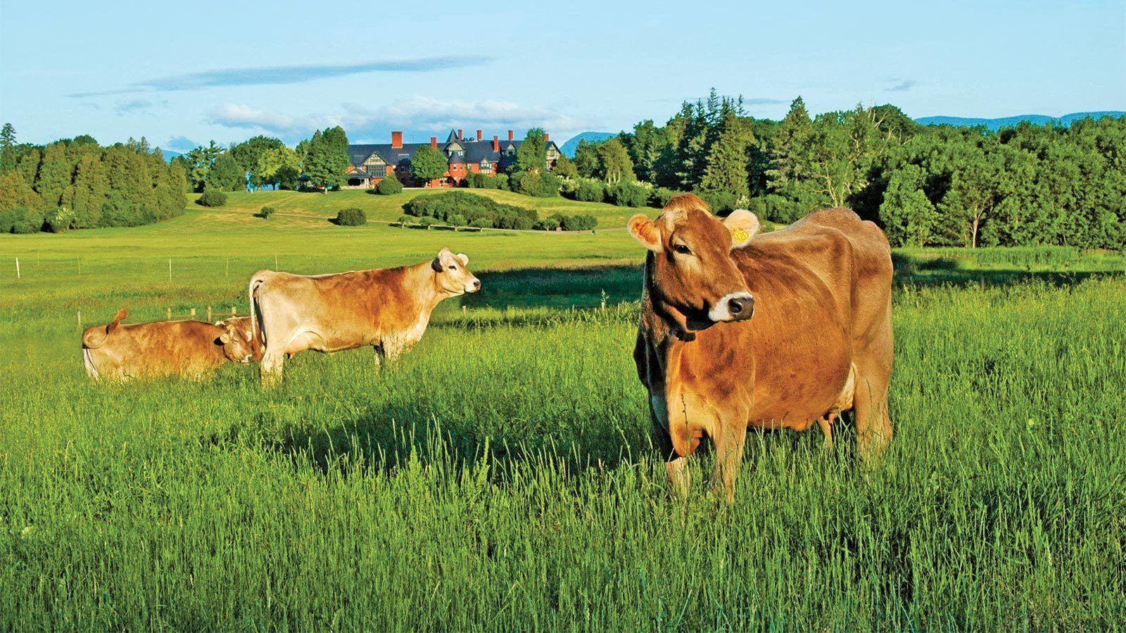 Vermont Champlain Wishes Shelburne farms, Vermont, New