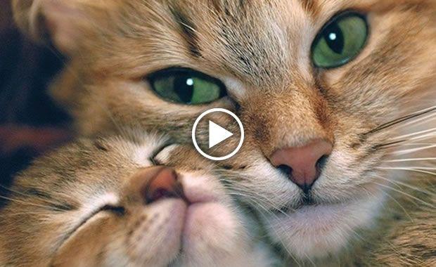 Mamma Gatta Parla Con I Suoi Cuccioli Video Gatti Dolci E Teneri