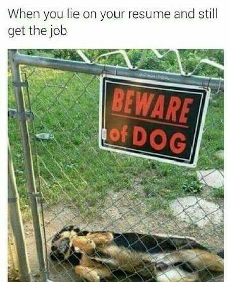 When You Lie On Your Resume Beware Of Dog Dogs Cute Dogs