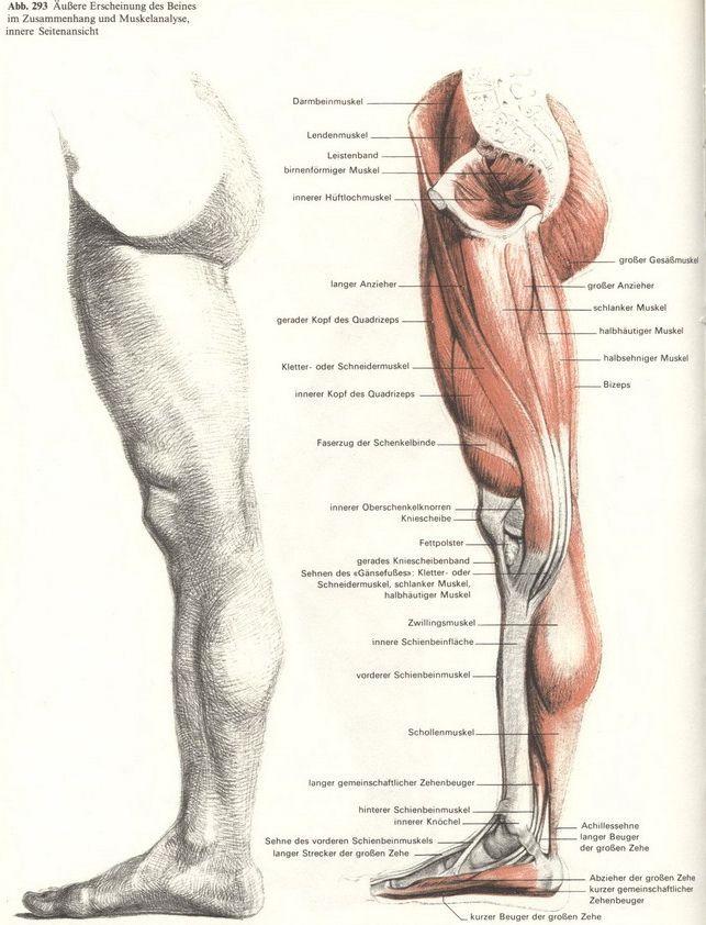 Pin von Maria MArt auf Anatomi   Pinterest