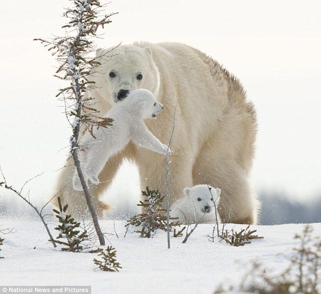Pin On Bear