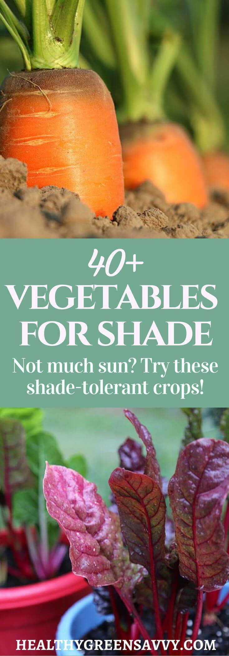 40+ Vegetables that Grow in Shade #shadecontainergardenideas