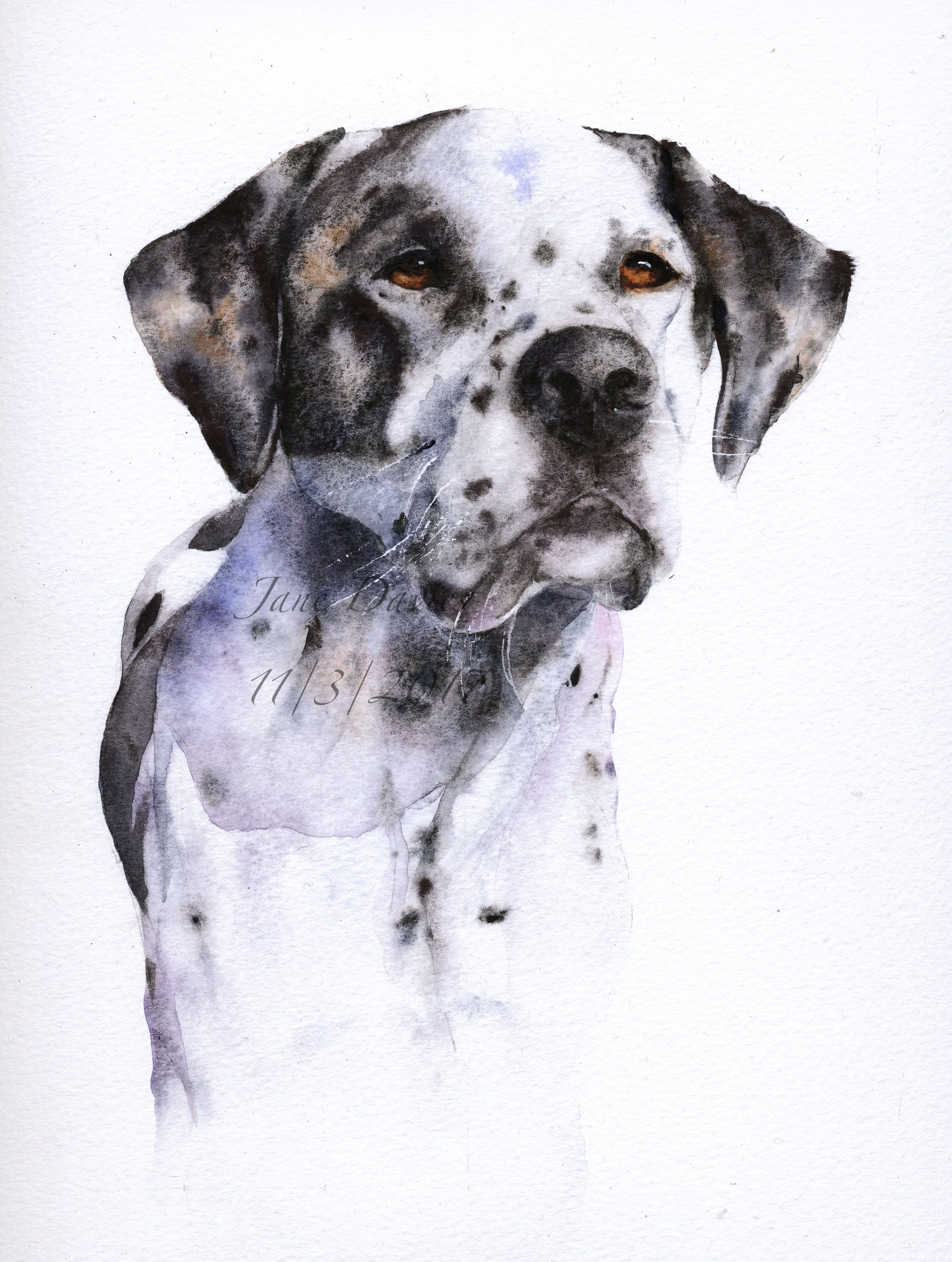 Animal Portraits By British Wildlife Photographer George: Pet Portrait Of A Labrador Cross Dalmatian. Painted By