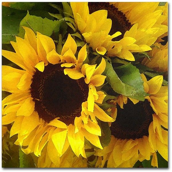 012a96963fbf1 Sunflowers' Square Canvas Print by Amy Vangsgard 18