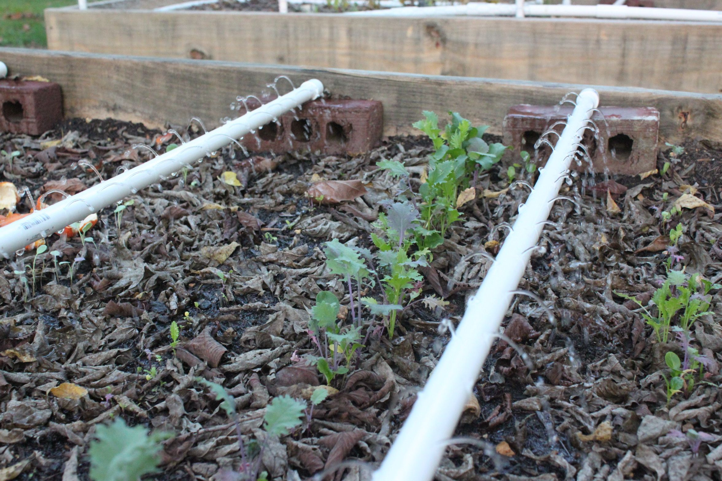 Irrigation For Raised Bed Gardening Modern Homemakers Erhohte Beete Gartenarbeit Erhohte Gartenbeete