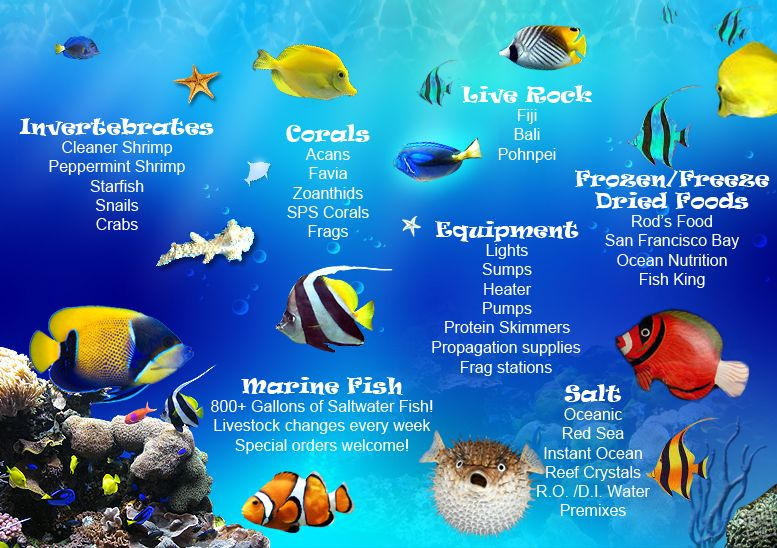 Saltwater fish an enthusiast of saltwater fish for Ocean fish names