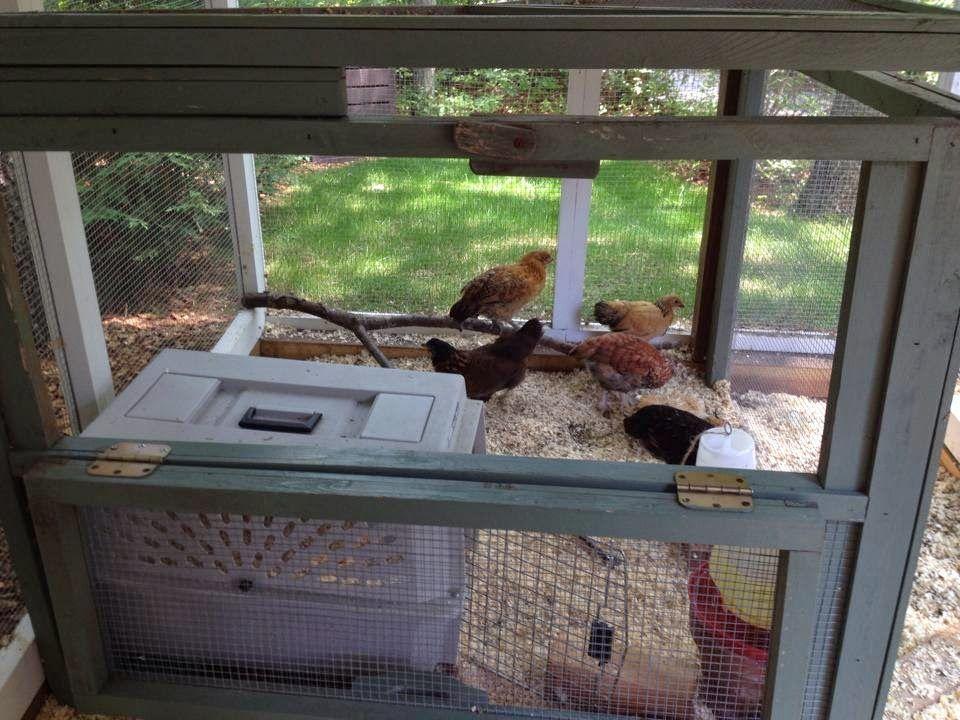 Tilly's Nest: Down Home Blog Hop~Number 91 + Makeshift Brooder