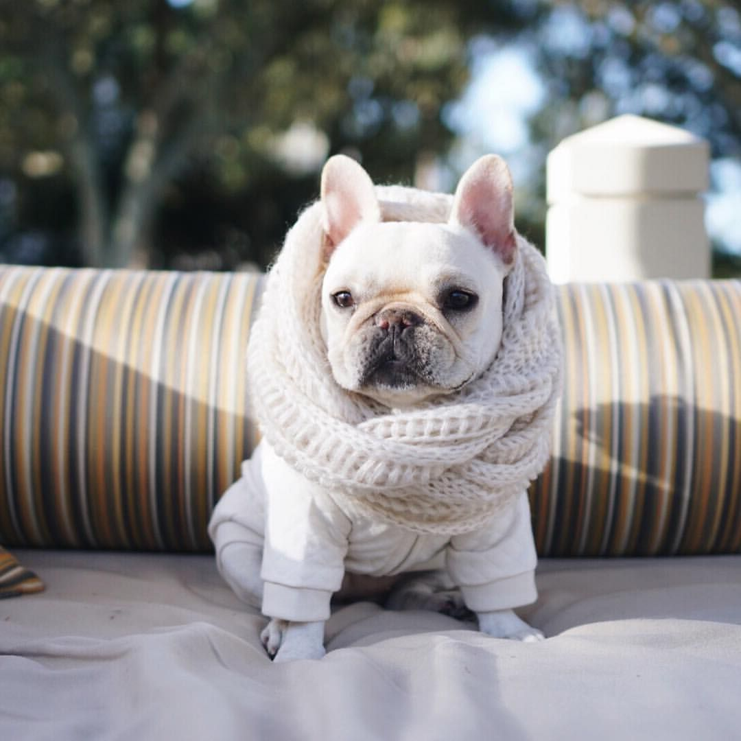 P I G Y O L On Instagram Finally Able To Wear Some Winter Clothes Southcarolina Hythanksgiving