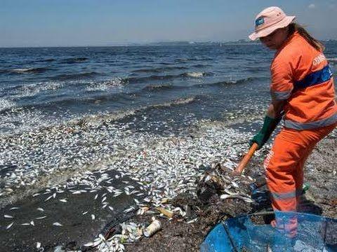 Miles de peces muertos en playas de Chile