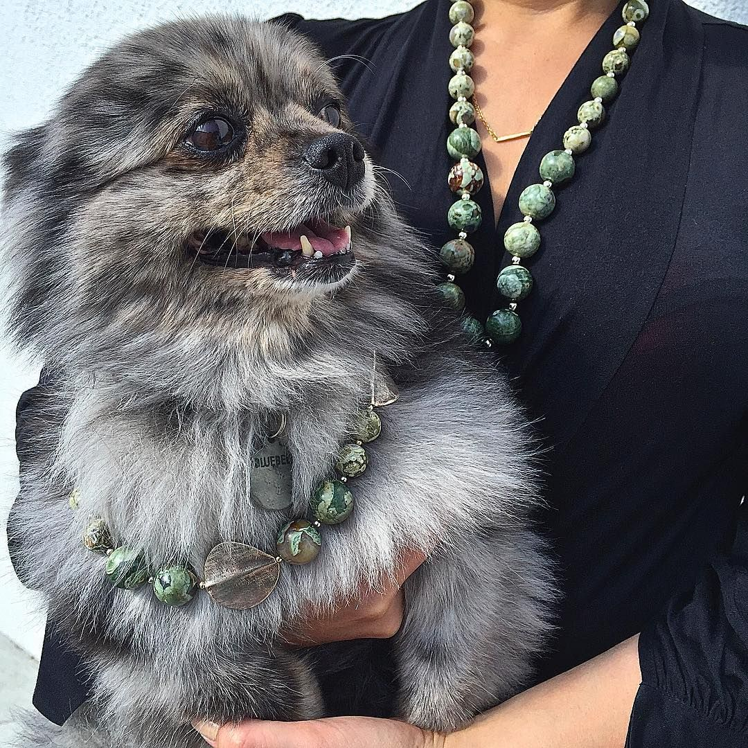 """""""Well one of us is going to have to go home and change."""" Bluebell was taken aback when someone else showed up in the matching #jasper and #silver #gemstonenecklace. #GemstoneJewelry #CSDesigns #WestHollywood #AdoptDontShop #RescueDog #CuteDog #pomeranian #MatchingNecklaces"""