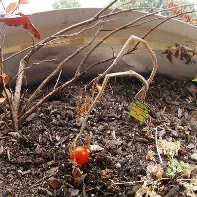 Fall Garden Clean Up: Preparing A Vegetable Garden For Winter