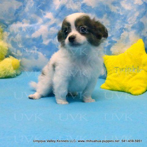Jenny Boy 3 5 19 15 Pet Transport Pets Pup
