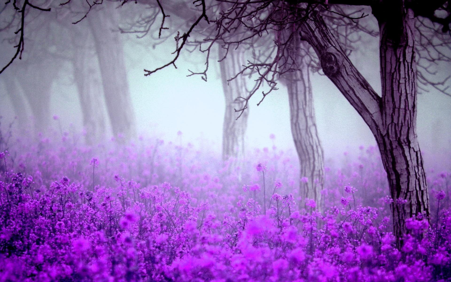 Fantastic Purple Flowers Flower Desktop Wallpaper Purple Flowers Wallpaper Free Flower Wallpaper