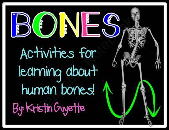 Bones Skeletal System From 1st Grade Is Easy Peesy On